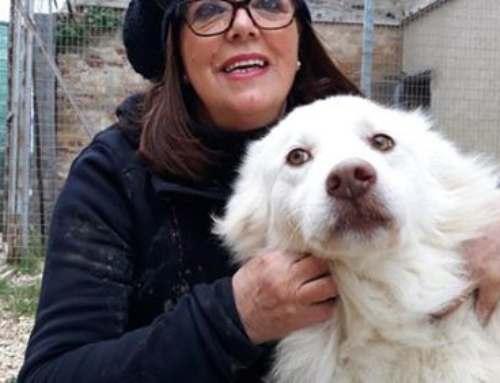 Sostieni il magic box aiuta l'associazione amici animali di Osimo